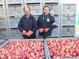 Ugo e Massimo con le mele Ambrosia