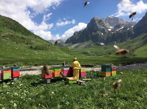 Un apiario circondato dalla spendida cornice delle montagne