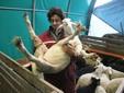 Matteo con un agnello di due mesi