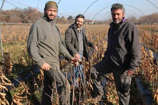 Luca, Daniele e Paolo Viale in un vivaio di piante di castagno nel periodo invernale di riposo vegetativo