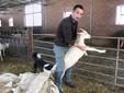 Marco con alcune capre piccole nella stalla di Valdieri