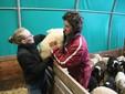 Sara e Matteo al lavoro nella stalla