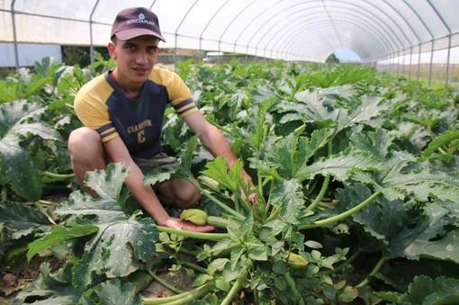 Enrico nella serra di zucchine chiare da raccogliere