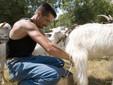 Marco durante la mungitura delle capre