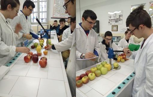 """Gli allievi del """"Virginio-Donadio"""" impegnati nel laboratorio durante le prove con lo strumento che misura la consistenza della polpa della frutta"""