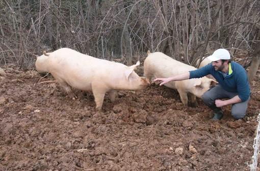 Flavio all'interno di un recinto di maiali allevati allo stato brado