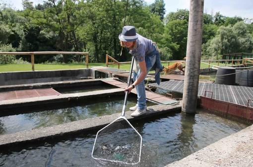 Lorenza pesca con il guadino le trote da trasformare in laboratorio