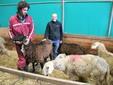 Matteo con un montone dalla lana scura