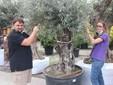Alex e Sara al lavoro su una pianta di ulivo