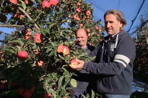Ugo e Massimo Giuliano nello splendido frutteto di mele Ambrosia