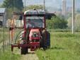 Enrico sfalcia l'erba tra le piante di castagni