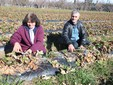 Stefanina e Luigi Impegnati nella pulizia del campo di fragole