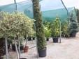 Ancora piante ornamentali