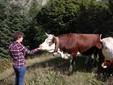 Martina accarezza una mucca in alpeggio