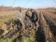 I fratelli Viale nel vivaio di piante di castagno coltivate in campo