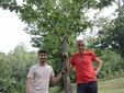 Marco ed Ettore con una giovane pianta di castagno