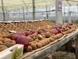 Tanti kiwi e le mele rosse in vetrina nel programma di Canale 5