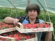 Stefanina con le fragole appena raccolte