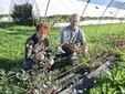 Firmina e Francesco tra i mirtilli piantati in campo ma protetti dalle reti antigrandine