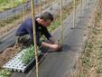 Enrico pianta i pomodori