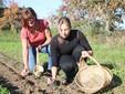 Debora e Giuliana impegnate nella raccolta dei fiori di Söfran