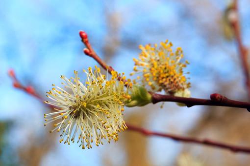 Nel parco di San Cassiano un nuovo bosco di piante tartufigene, per tutelare l'emblema della gastronomia del territorio