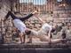 In foto i ballerini di Alchimie Project, giovane scuola di ballo di Bandol, in Provenza, protagonisti dello spettacolo in programma mercoledì 4 agosto al Teatro della Pietra di Bergolo