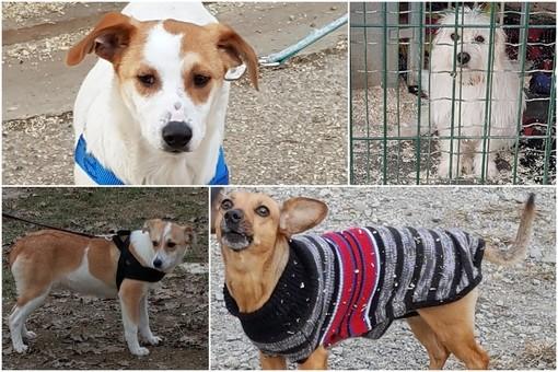 """Bra, quattro cuccioli da salvare al """"Rifugio di Fido"""" di Pollenzo"""