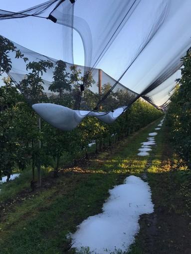 Tempesta sulla Granda, danni alle coltivazioni saluzzesi: grandine a Levaldigi e a Verzuolo