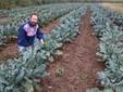 Nel campo di broccoli