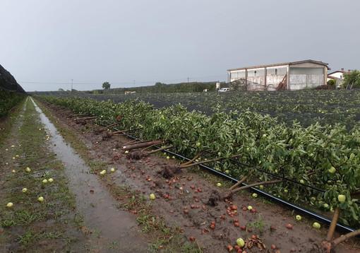 La tromba d'aria nel Saluzzese spazza via interi frutteti: danni gravissimi per più di 100 aziende