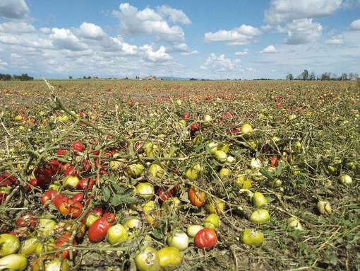 L'allarme di Coldiretti Cuneo: con il meteo instabile dell'estate, l'agricoltura è K.O.