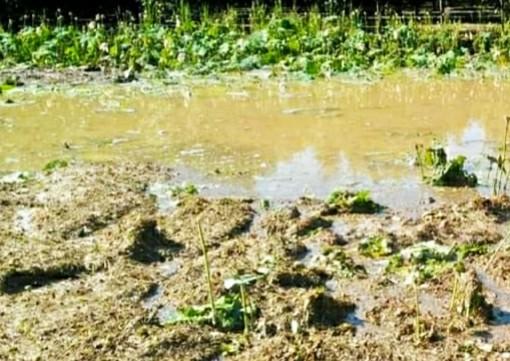 Distrutto dalla grandine il laghetto di Loto a Vezza d'Alba