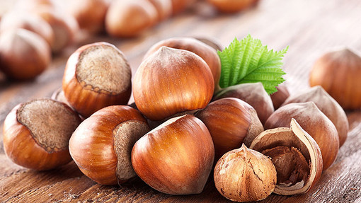 Il 32% dell'intera produzione mondiale di nocciole è assorbita dalla multinazionale albese