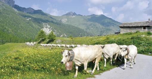 Compral Carni, nuove azioni in Italia ed Europa