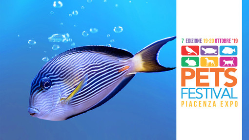 A Petsfestival c'è la più grande fiera di acquari d'Italia
