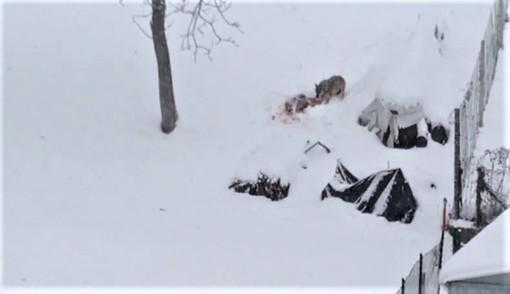 Alcuni fermoimmagine del video girato in via Crissolo a Paesana