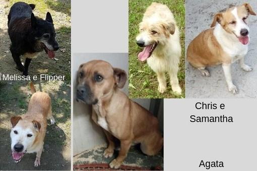 Tanti cani vi aspettano al canile Dog's World di Vaccheria