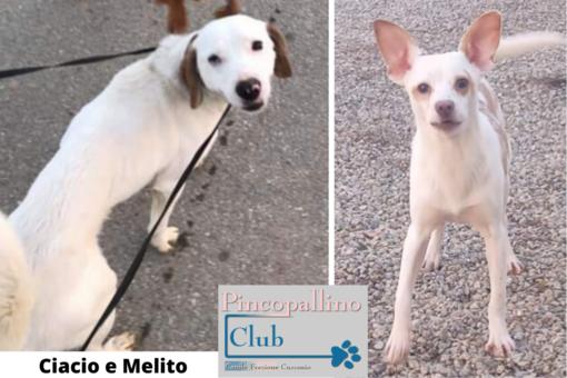 Ciacio e Melito: due cuccioloni in cerca di una famiglia