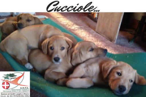 Queste cucciole vi aspettano
