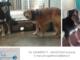 """I cani """"invisibili"""" hanno troppa paura per mostrarsi ai visitatori"""