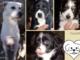 Cremino: aggredito dagli altri cani, cerca una casa sicura per lui. Tre cucciole dolcissime vi aspettano.
