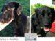Nero non significa cattivo: i cani neri sono buoni come tutti gli altri