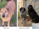 Burrita, Bianca e Boh aspettano una famiglia che li accolga