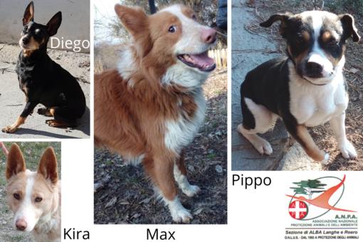 Max, Kira, Pippo e Diego in cerca di una famiglia