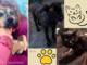 Due cani giovanissimi e una gattina di tre mesi in cerca di adozione