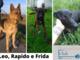 Leo, Rapido e Frida cercano casa