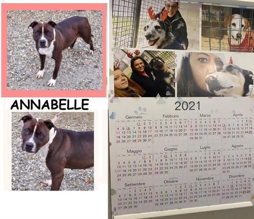 La sezione Alba-Bra della LIDA lancia un appello per trovare casa a tre dolci cagnoline