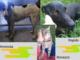 Nuovi arrivi: due cani e un gatto