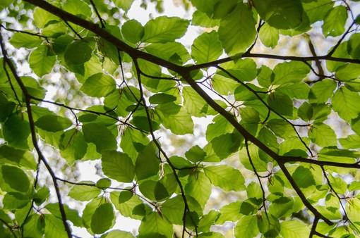 La silenziosa lezione degli alberi: a Bra una serata con Giorgio Vacchiano